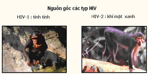 nguồn gốc virus HIV